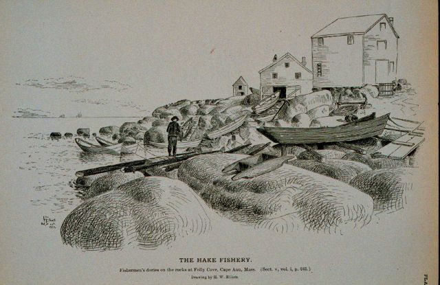 Fishermen's dories on the rocks at Folly Cove, Cape Ann, Massachusetts Drawing by H Picture