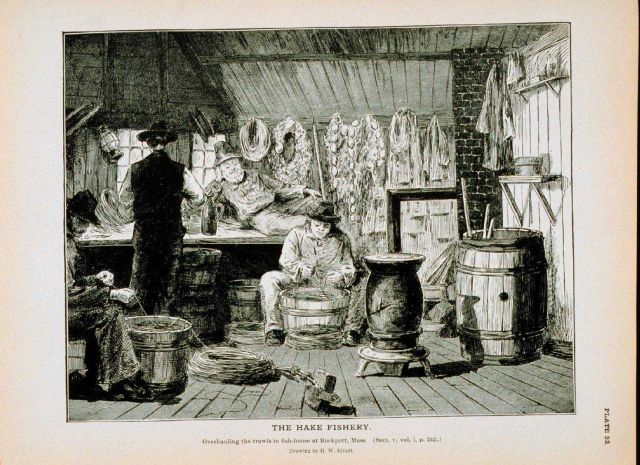 Overhauling trawls in fish-house at Rockport, Massachusetts Drawing by H Picture