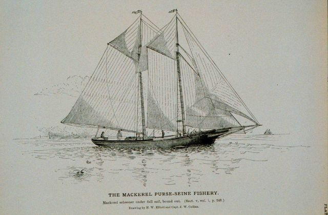 Mackerel schooner under full sail, bound out Drawing by H Picture