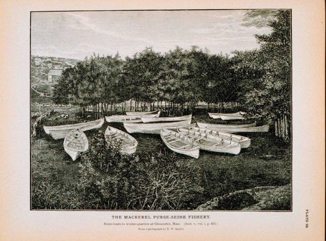 Seine boats in winter quarters at Gloucester, Massachusetts From photograph by T.W Picture