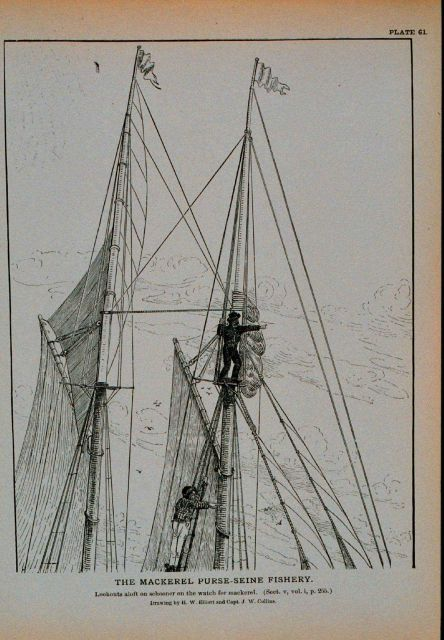 Lookouts aloft on schooner on the watch for mackerel Drawing by H Picture