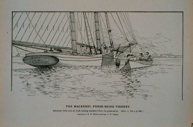 Mackerel schooner with crew at work bailing mackerel from the purse seine Drawing by H Picture