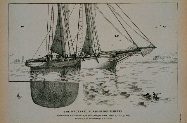 Mackerel schooner with pocket or spiller shipped at sea Drawing by H Picture