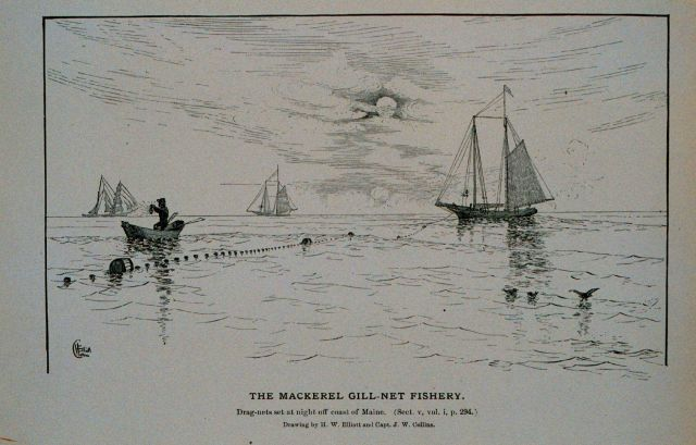 Mackerel drag-nets set at night off coast of Maine Drawing by H Picture