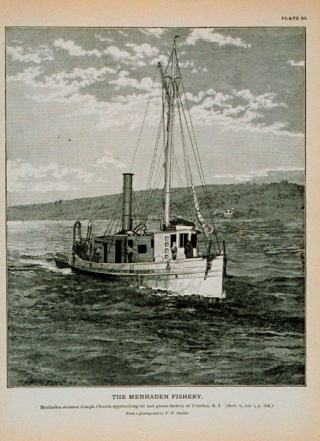 Menhaden steamer Joseph Church Approaching oil and guano factory at Tiverton, R.I Picture