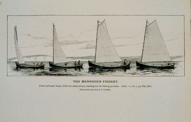 Menhaden purse and mate boats and two carry-away boats Starting for the fishing grounds From sketch by Capt Picture
