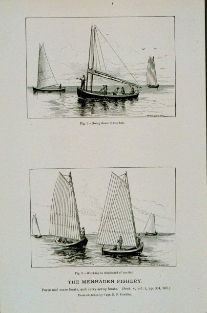 Menhaden purse and mate boats Picture