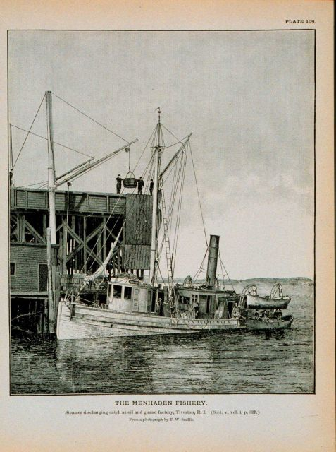 Menhaden steamer discharging catch at oil and guano factory, Tiverton, R.I Picture
