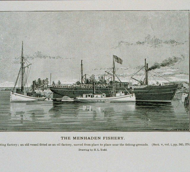 Menhaden floating factory Picture