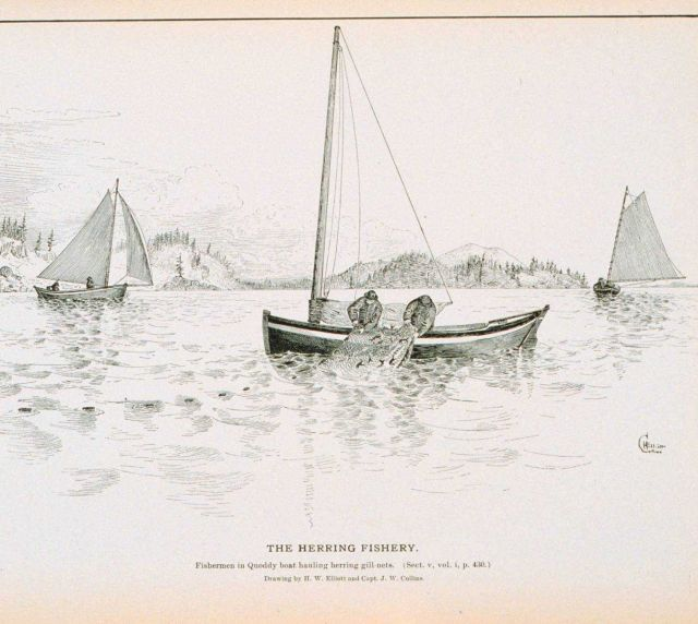 Fishermen in quoddy boat hauling herring gill-nets Drawing by H Picture