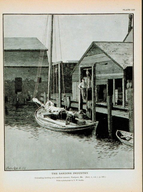 Herring boat landing fish at sardine cannery, Eastport, Maine From a photograph by T Picture