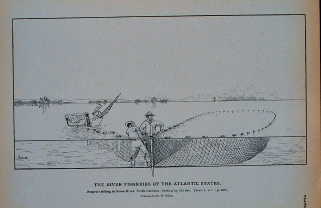 Drag-net fishing in the Neuse River, North Carolina;
