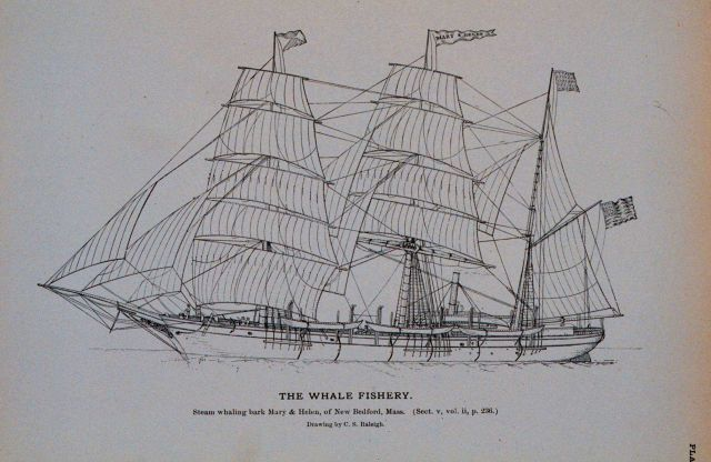 Steam whaling-bark Mary & Helen, of New Bedford, Massachusetts Afterwards the Rodgers of the Jeanette search expedition Drawing by C Picture
