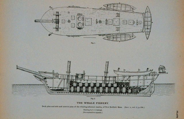 Deck plan and side and interior plan of whaling-schooner Amelia Of New Bedford, Massachusetts Drawing by C Picture