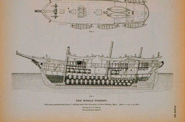 Deck plan and side and interior plan of whaling-bark Alice Knowles Of New Bedford, Massachusetts Drawing by C Picture