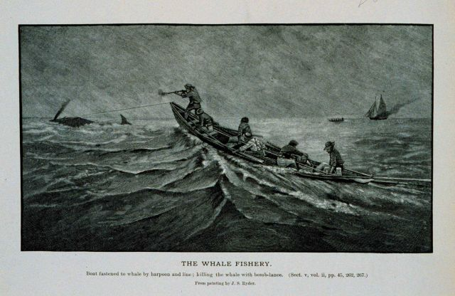Boat fastened to whale by harpoon and line; killing the whale with bomb lance From painting by J Picture
