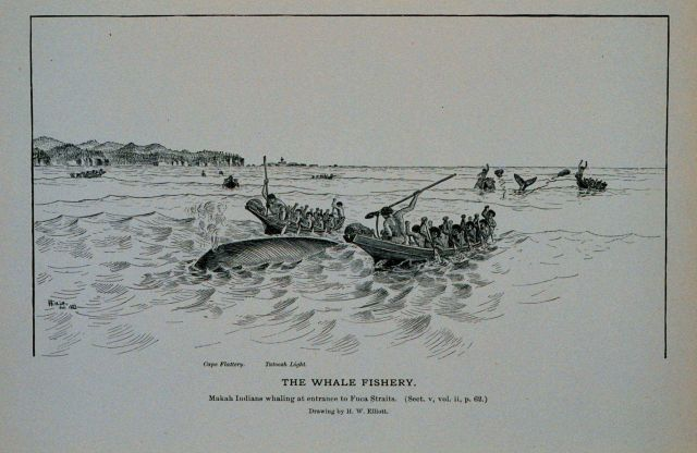 Makah Indians whaling at entrance to Fuca Straits Drawing by H Picture