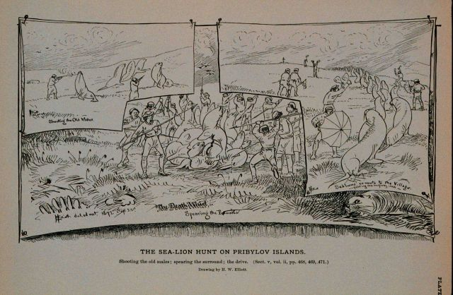 Shooting the old males; spearing the surround; the drive Drawing by H Picture