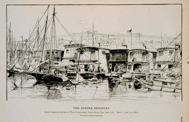 Oyster-barges at foot of West Tenth street, North River, New York City Drawing by Ernest Ingersoll Picture