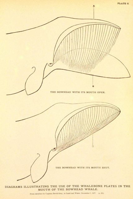 Plate 8 Picture