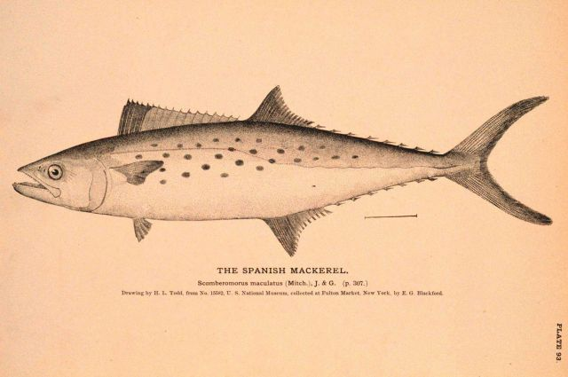 Plate 93 Picture
