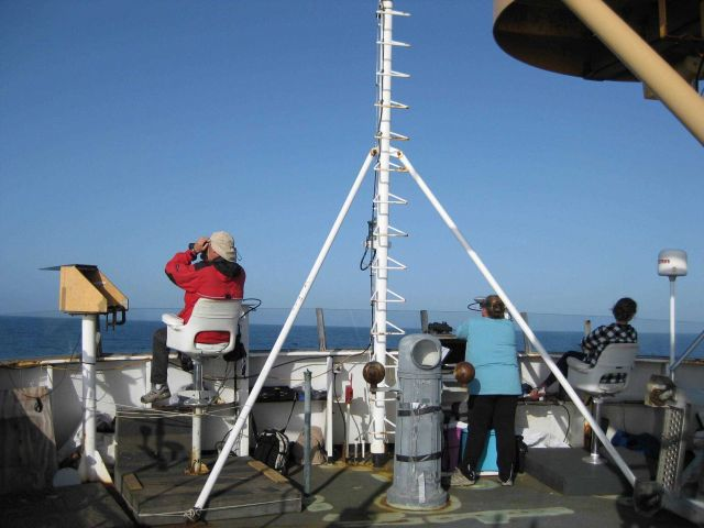 Sea bird and marine mammal observers on the flying bridge of the NOAA Ship MILLER FREEMAN. Picture
