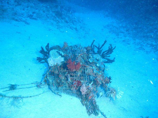 Marine debris - derelict fish trap with numerous sponges Picture