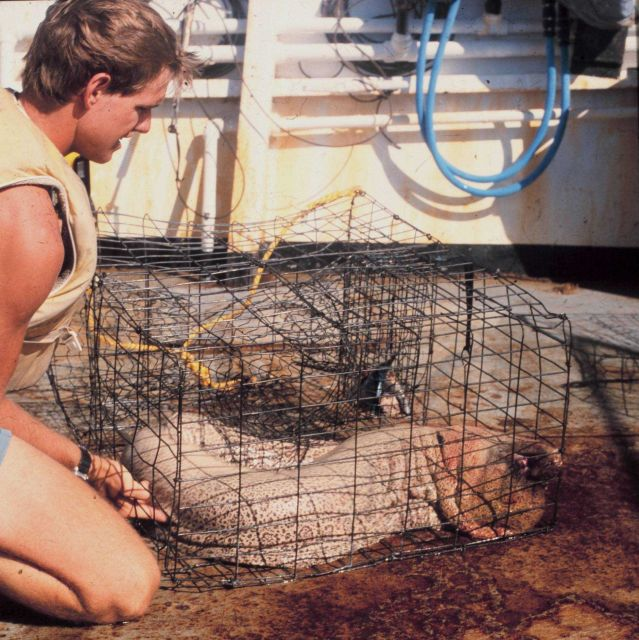 A large moray eel is brought up in a fish trap during research studies on the NOAA Ship TOWNSEND CROMWELL. Picture