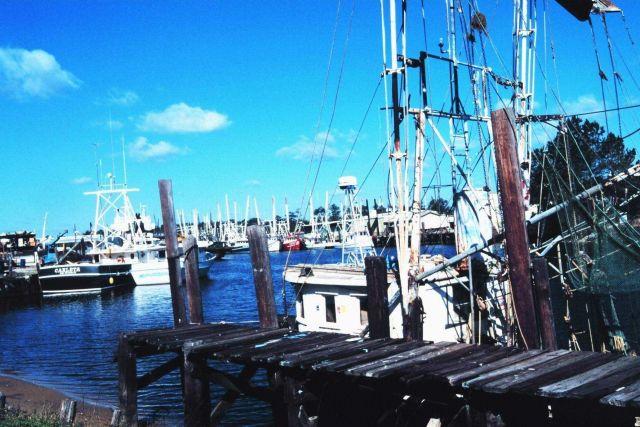 Shrimp boats at Bayou la Batre Picture