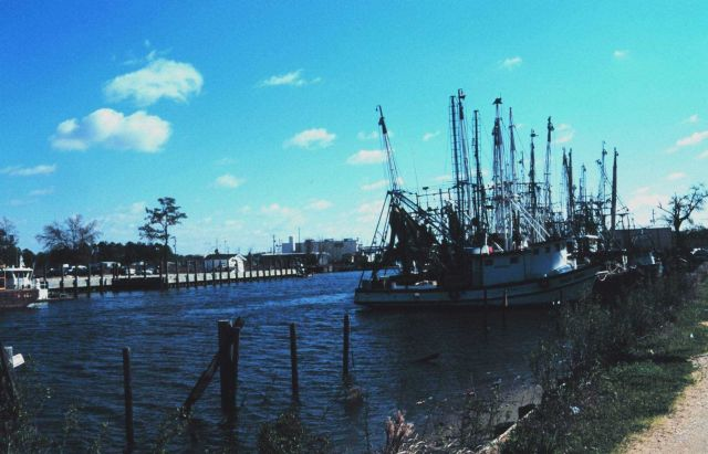 Shrimp boats at Bayou la Batre Picture