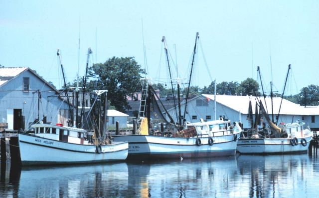 Shrimp boats at Fernandina Beach Picture