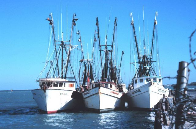 Three shrimp boats at the Municipal Pier Picture