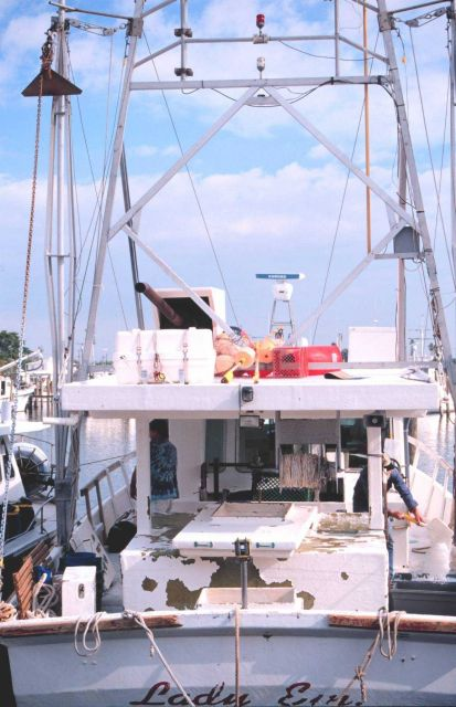 Shark, snapper, and grouper longliners, etc Picture