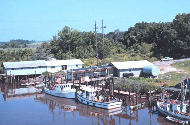 Shrimp boats at Darien along the Altamaha River Picture