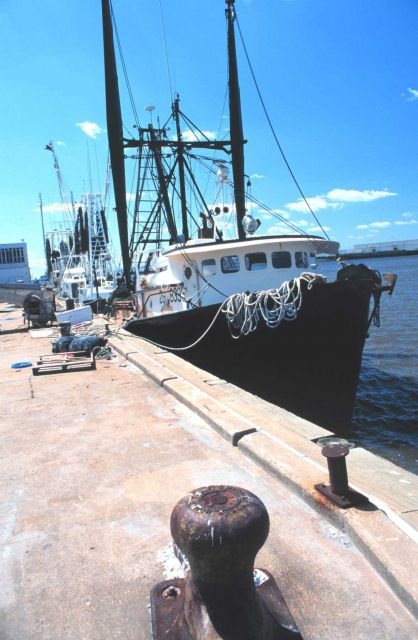 A few of the Gulf of Mexico Croaker boats Picture