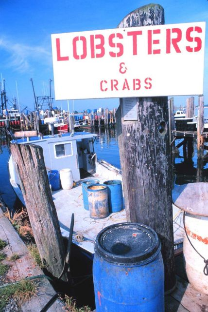 Part of the inshore lobster fleet Picture