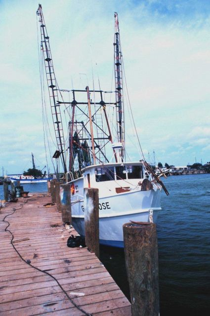 Shrimp boats in the Shrimp Basin Picture
