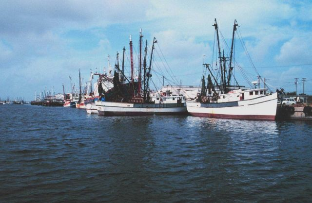 Shrimp boats tied up at Conn Brown Harbor Picture