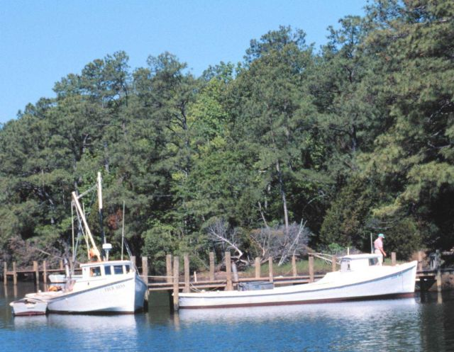 Chesapeake dead rise pound net boats tied up along the bgank of a creek Picture