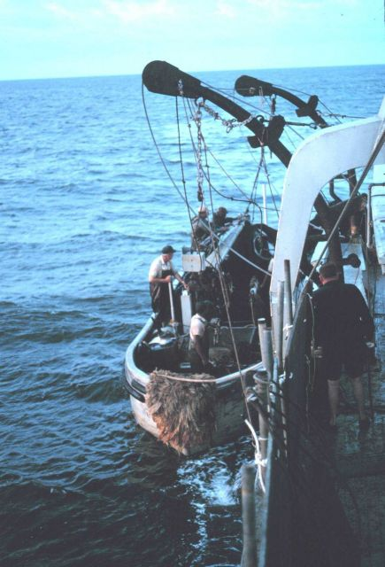 Menhaden fishing - Putting over the purse seine boats early in the morning Picture