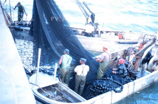 Men in the purse seine boats standby as the pumping operation proceeds Picture