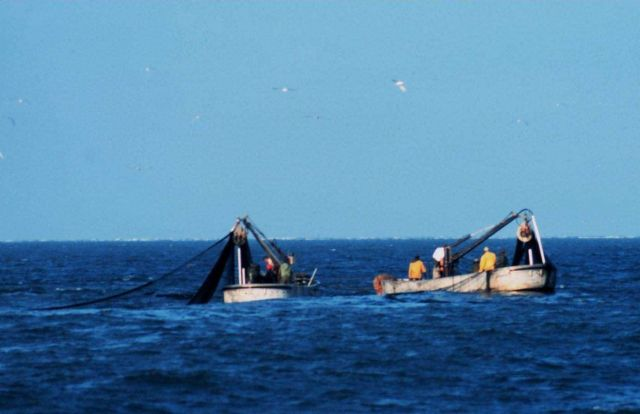 Purse seine boats setting nets to capture school of menhaden Picture