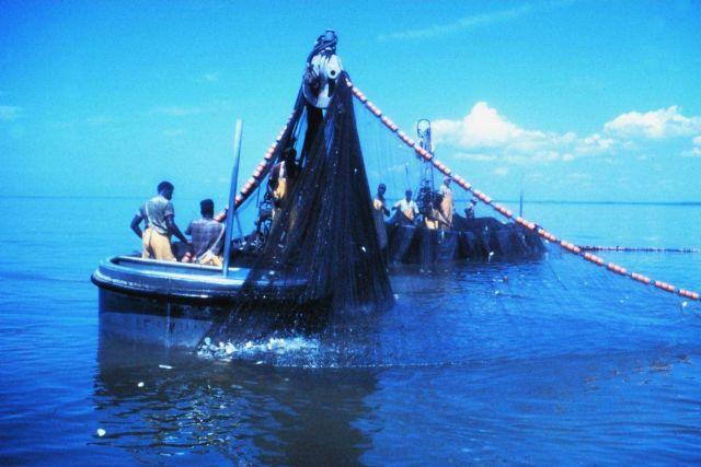 Menhaden fishing - pursing menhaden net with power blocks Picture