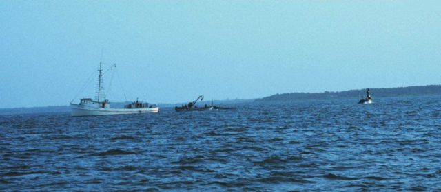 Menhaden fishing - mother vessel and purse seiner boats Picture