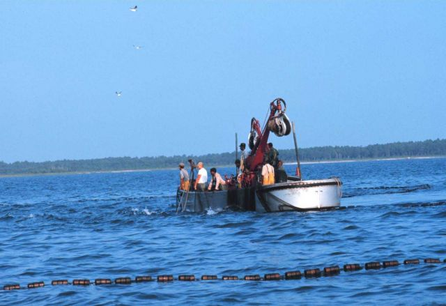 Menhaden fishing - purse seiner boats ready to begin closing the purse Picture