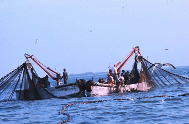 Menhaden fishing - purse seiner boats closing the purse using power blocks Picture