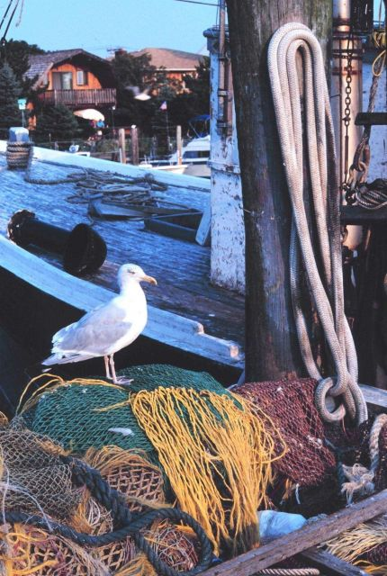 Fish nets, fishing boats, and the random sea gull Picture