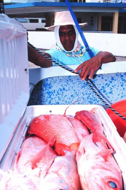 Customer inspecting a catch of snapper from the small boat fishing fleet Picture