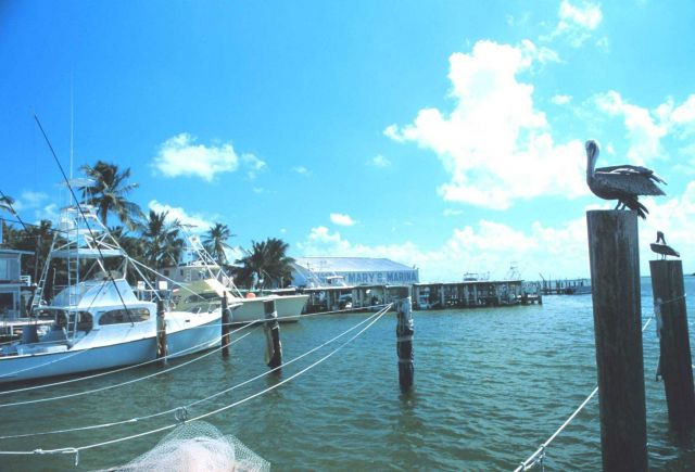 Recreational fishing boats and pelicans grace the Islamorada waterfront Picture