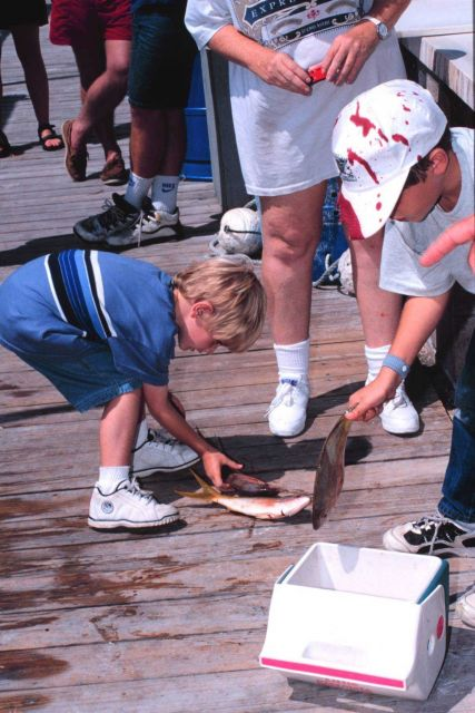 Young fisherman helps pack up part of the day's catch of yellowtail snapper. Picture